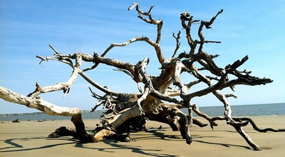 Photo of Beach Driftwood Beach at Beachview Drive, Jekyll Island, GA 31527, United States