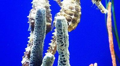 Photo of Aquarium The Florida Aquarium at 701 Channelside Drive, Tampa, FL 33602, United States