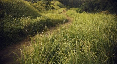 Photo of Trail Bukit Campuhan at Jalan Raya Campuhan, Gianyar 80515, Indonesia