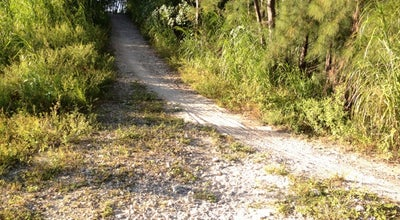 Photo of Trail Virginia Key MTB Trails at Virginia Key, Miami, FL 33149, United States