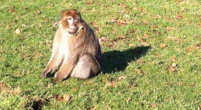 Photo of Park Trentham Monkey Forest at Trentham Estate, Trentham ST4 8AY, United Kingdom
