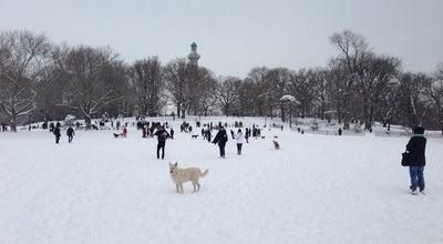 Photo of Dog Run Fort Greene - Dog Park at 166 Dekalb Ave, Brooklyn, NY 11201, United States