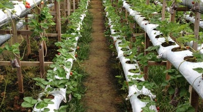 Photo of Farm Genting Strawberry Leisure Farm at No.1, Lot 3707, Jalan Jati 2, Genting Highlands 69000, Malaysia