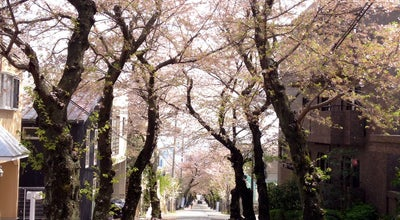 Photo of Trail 桜のトンネル at 灘区高尾通3丁目~国玉通4丁目, Kobe, Japan