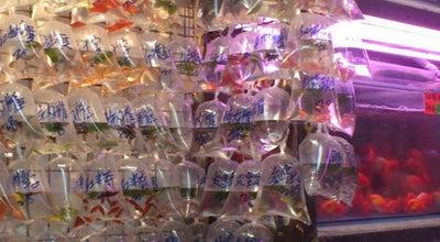 Photo of Market Goldfish Market at 124a-209 Tung Choi St, Mong Kok, Hong Kong