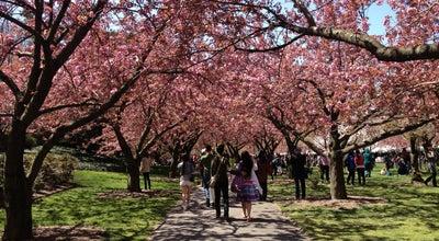 Photo of Garden Brooklyn Botanic Garden - Japanese Garden at 990 Washington Ave, Brooklyn, NY 11225, United States