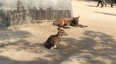 Photo of Trail 鹿の居場所 at 宮島町, Hatsukaichi, Japan