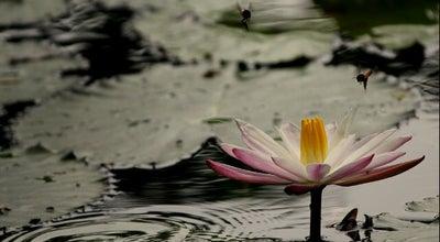 Photo of Lake Lotus Pond at Lotus Pond Rd, Banjara Hills, Hyderabad, India