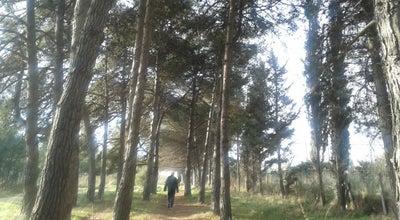 Photo of Trail Çamlık Yürüyüş Parkuru at Bandırma, Turkey