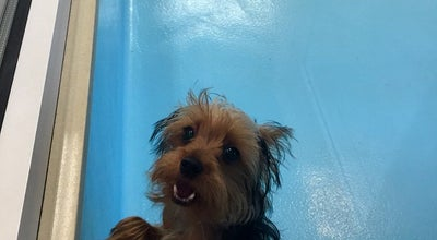 Photo of Pet Store Biscuits & Bath Doggy Gym at 41 W 13th St, New York, NY 10011, United States