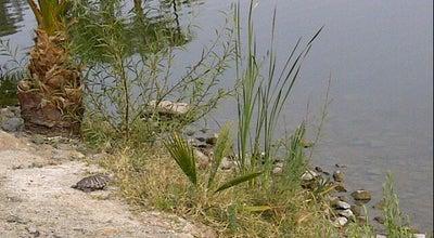 Photo of Lake Lago del Bosque de la Ciudad at Alvarado, Mexicali, Mexico