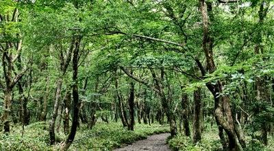 Photo of Mountain Hallasan at 1100로 2070-61, Jeju 63077, South Korea