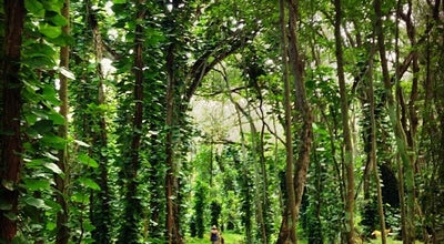 Photo of Trail Hoopii Trail at Kapaa, HI 96746, United States