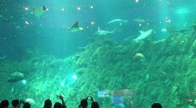 Photo of Theme Park Ride / Attraction Aqua City 夢幻水都 at The Waterfront, Ocean Park Hong Kong, Wong Chuk Hang, Hong Kong