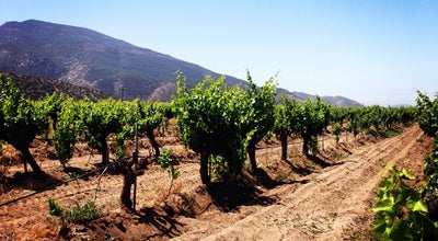 Photo of Vineyard Valle De Guadalupe at Asufre, Mexico