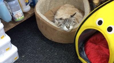 Photo of Pet Store Pet Island at Jackson Ave, Long Island City, NY 11101, United States