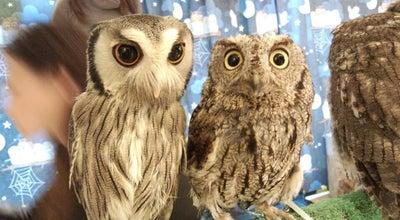 Photo of Food フクロウのみせ (Owl Cafe) at 月島1-27-9, 中央区 104-0052, Japan