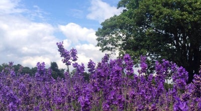 Photo of Garden Carshalton Lavender at Croydon Ln, Banstead SM7 3BE, United Kingdom