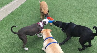 Photo of Dog Run Coliseum Dog Park at 1466 S. Wabash Ave., Chicago, IL 60605, United States
