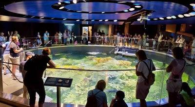 Photo of Aquarium New England Aquarium at 1 Central Wharf, Boston, MA 02110, United States