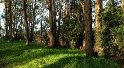 Photo of Trail Albany Hill Park at Albany Hill Park, Albany, CA 94706, United States