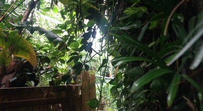 Photo of Botanical Garden Plantasia at Oasis Park The Piazza Parc Tawe, Swansea SA1 2AL, United Kingdom