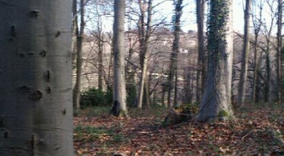 Photo of Forest Leigh Woods at Abbots Leigh, United Kingdom