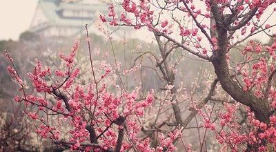 Photo of Park 大阪城公園 梅林 at 大阪城, 大阪市, Japan