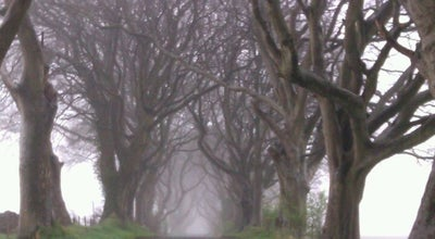 Photo of Scenic Lookout The Dark Hedges at Off Bregagh Road, Ballymoney B T53, United Kingdom