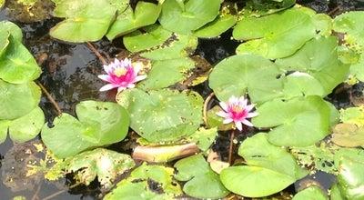 Photo of Lake 曲院风荷 Breeze-ruffled Lotus at Winding Garden at 北山路89号, 杭州市, China