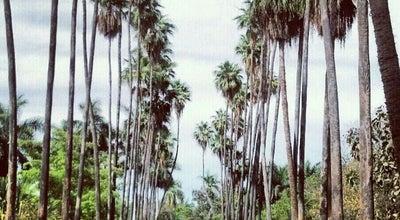 Photo of Park Parque Sinaloa at Los Mochis, Mexico