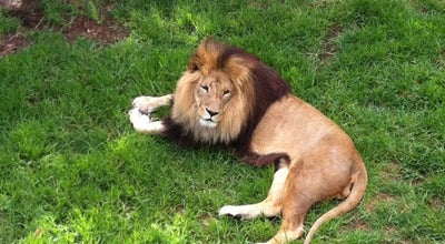 Photo of Zoo Melbourne Zoo at