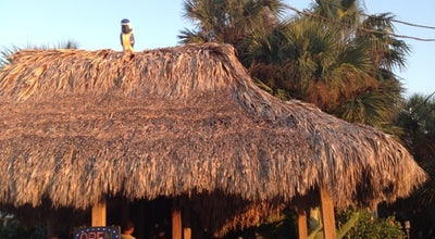 Photo of American Restaurant Blue Parrot at 68 W Gorrie Dr, St. George Island, FL 32328, United States
