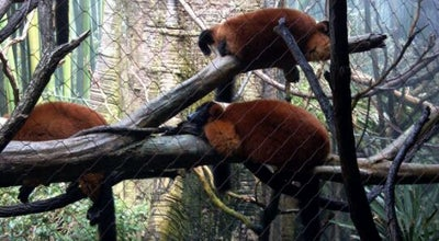 Photo of Zoo Madagascar at Bronx Zoo, Bronx, NY, United States