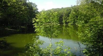 Photo of Lake Платоновский пруд at Russia