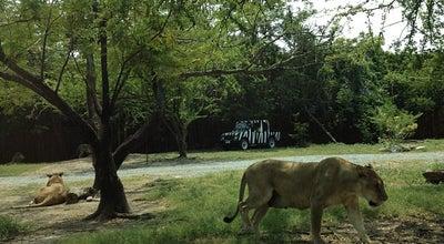 Photo of Zoo Safari World (ซาฟารีเวิลด์) at 99 Panya Indra Rd., Khlong Sam Wa 10510, Thailand