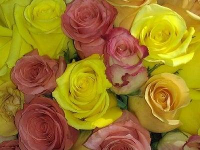 Лимар астана доставка цветов как нарисовать подарок для мамы на 8 марта