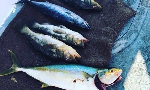 Redondo beach harbor in ca united states harbor reviews for Redondo sport fishing