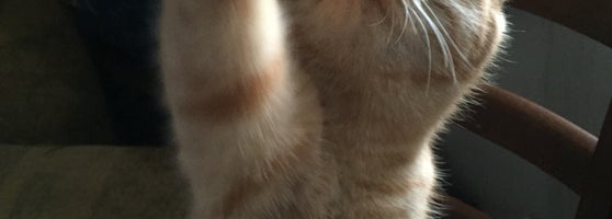 Ветклиник кот и пес алматы