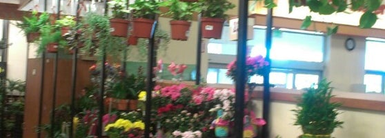 Fred Meyer In Battle Ground Is Worthless For House Plants So I Have To Come  Here To Orchards.