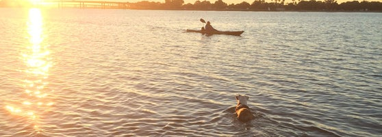 Dogs Just Run Around Everywhere My Dog Likes Kayaks And Started Following This Dude In The Water