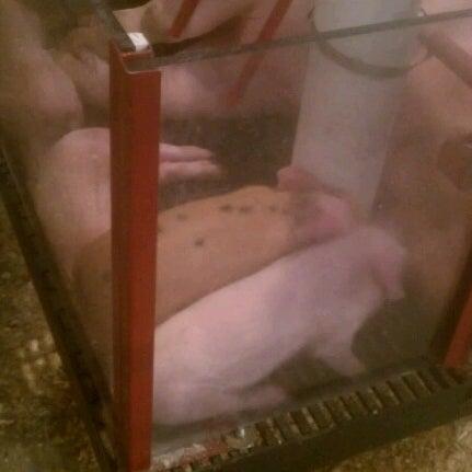 Photo taken at Swine Barn by CHRIS H. on 8/30/2012