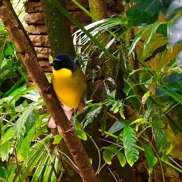 Photo taken at Maharajah Jungle Trek by SirZac on 1/29/2017