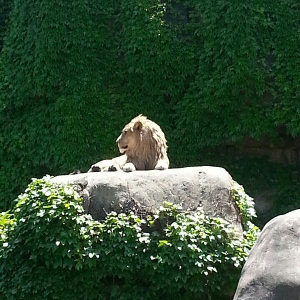 Photo taken at Lincoln Park Zoo by Paul H. on 6/7/2013