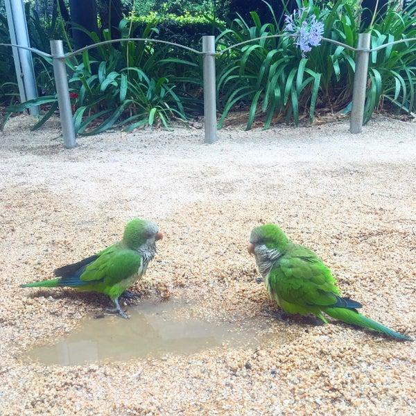 Photos at jardins del palau robert park in la dreta de l - Jardins del palau ...