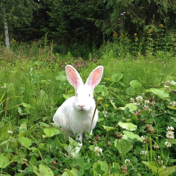 На воле разгуливает пара кроликов, выпущенных на территорию в качестве эксперимента. Кроме того, у речной заводи живет цапля, в песчаных холмах поселились стрижи, а ночью можно набрести на ежа.