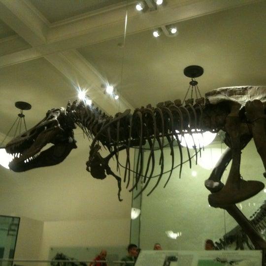 Photo taken at David H. Koch Dinosaur Wing by Angelina D. on 11/5/2012