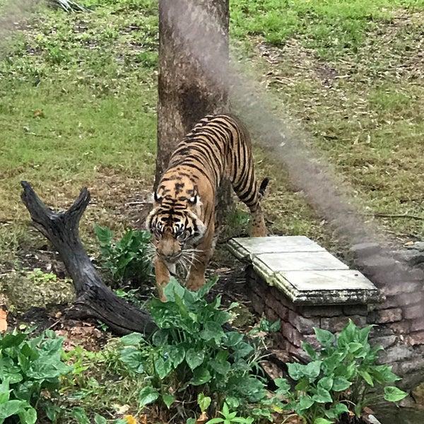 Photo taken at Maharajah Jungle Trek by Gino E. on 5/19/2017