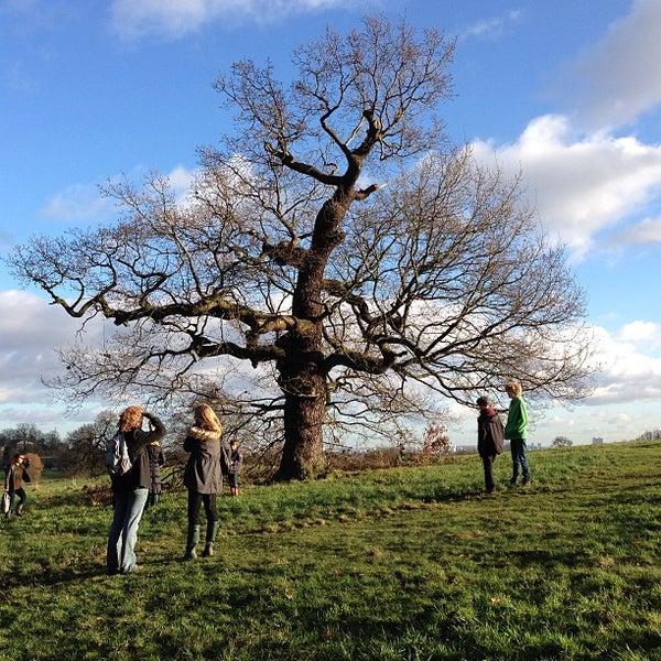 1/1/2013 tarihinde Bill G.ziyaretçi tarafından Hampstead Heath'de çekilen fotoğraf