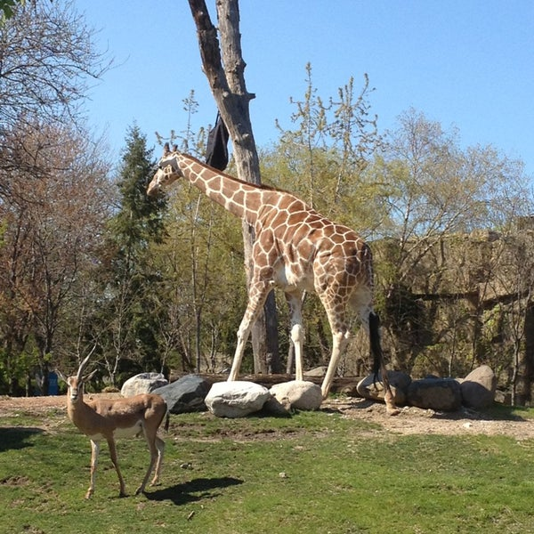 Photo taken at Lincoln Park Zoo by Josh B. on 5/8/2013